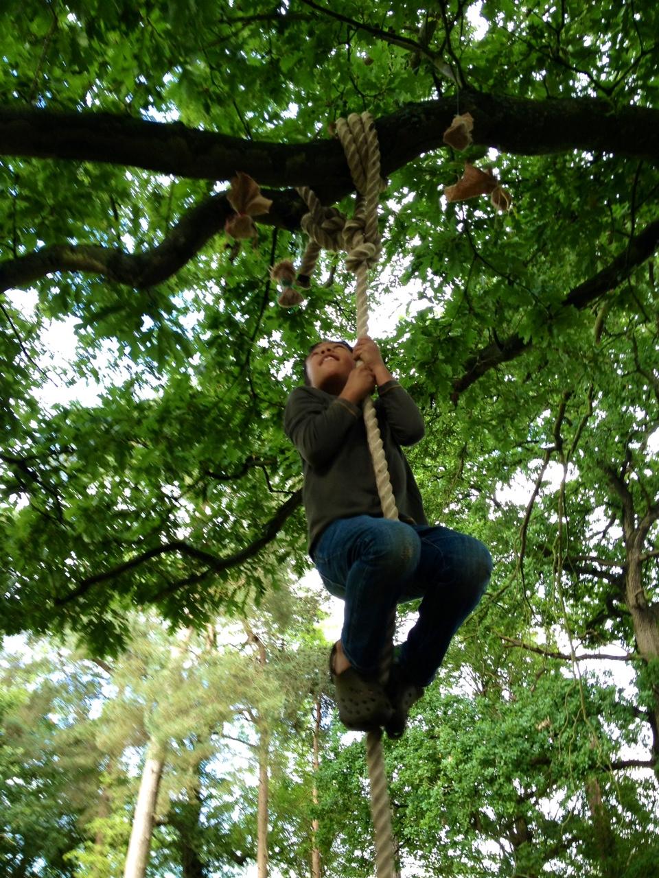 levi-climbing-tree
